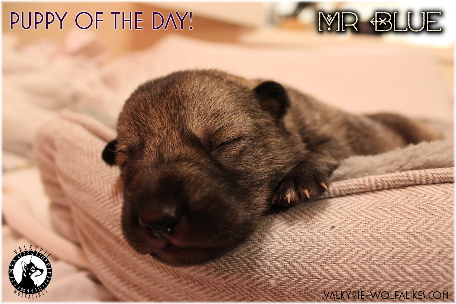 Pup of the Day 11 April