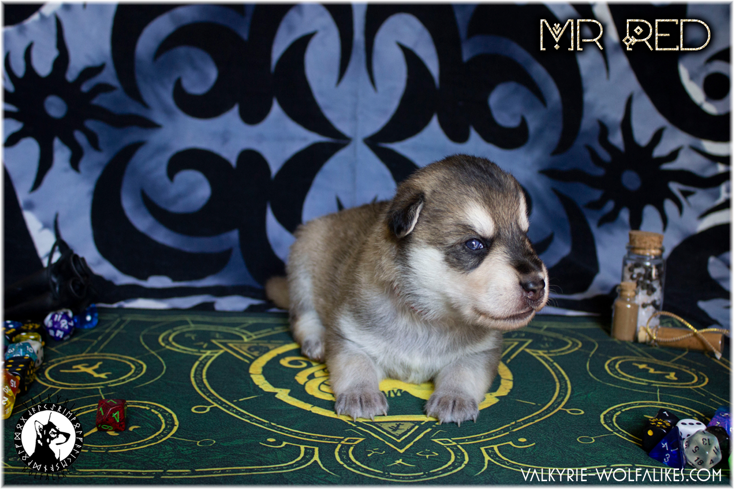 Happy two weeks old pups!