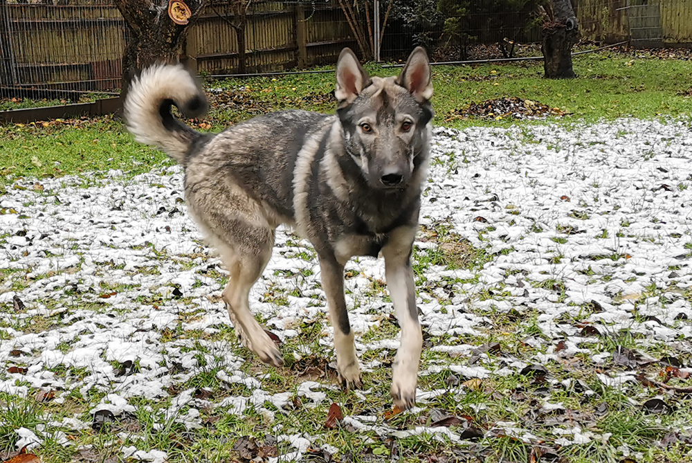 Nanuq is still looking for a new home